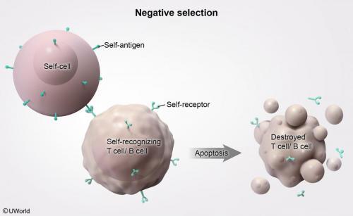 Negative Selection